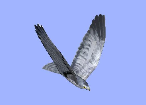 RoBird-V2
