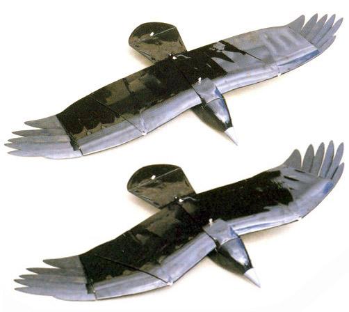Raven431