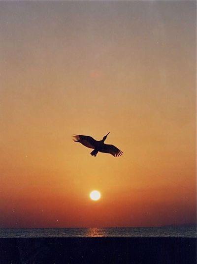 朱鷺凧013