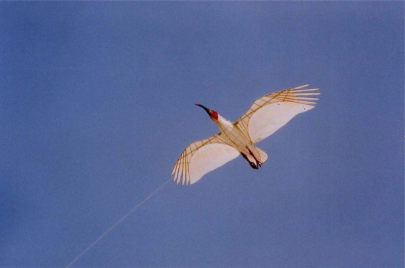 朱鷺凧111