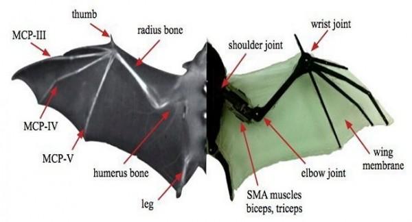 Robotic-Bat-batbot