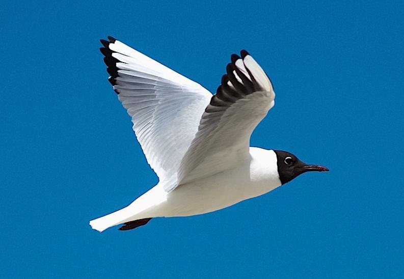 S Gull0113