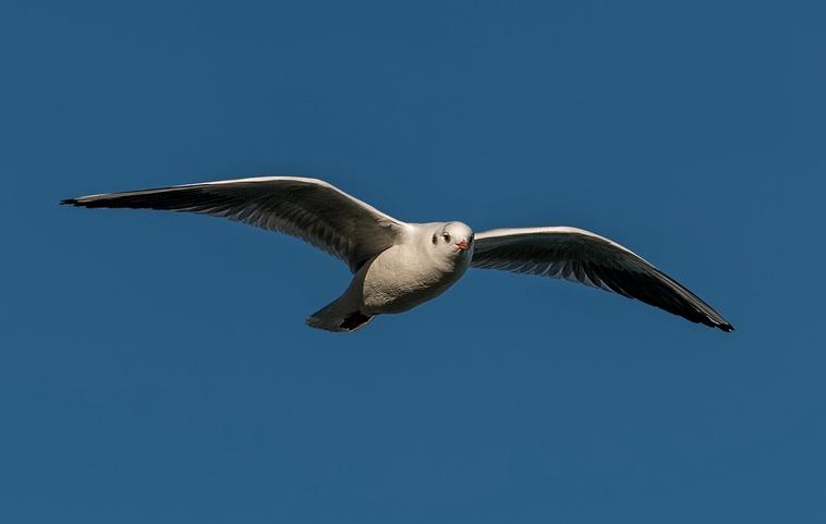S Gull0112
