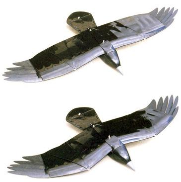 Raven4_31